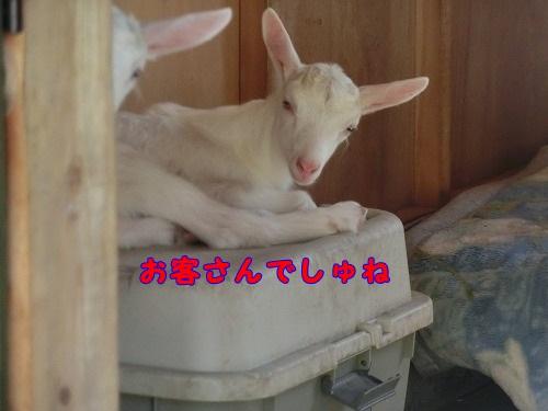 068_2014052022345355d.jpg