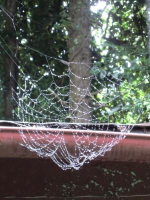 雨つぶに装飾された蜘蛛の巣