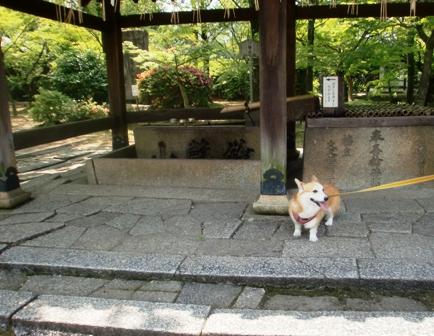 菩提寺 10