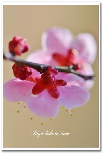 春の季節を撮る