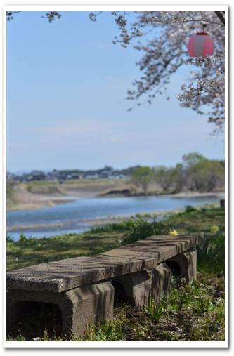 金崎の桜まつり