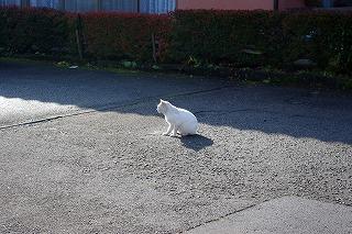 湯田川の猫その1