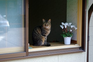 湯田川の猫その2