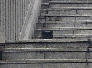 渋谷_御嶽神社_黒猫