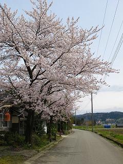 20100427_09_横代_熊野神社_桜
