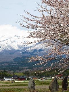 20100427_20_遊佐_鳥海山と桜