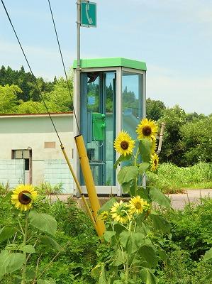 電話ボックスと向日葵