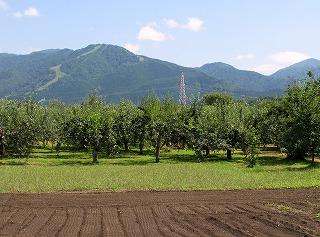 20100819_りんご畑
