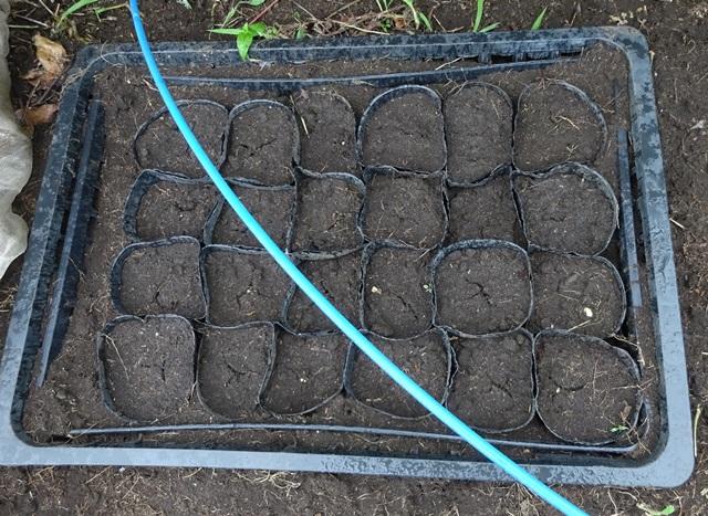 予備の大豆
