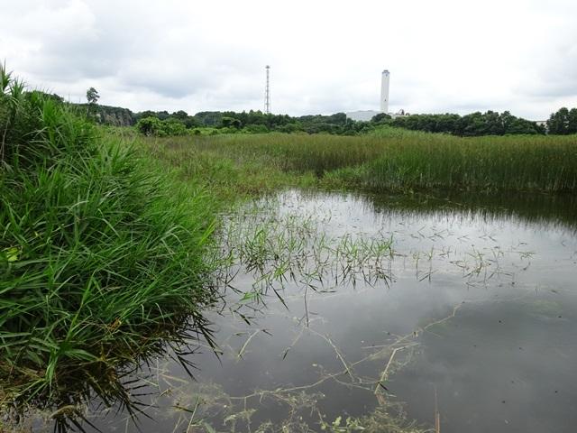 水位が高い大森の池