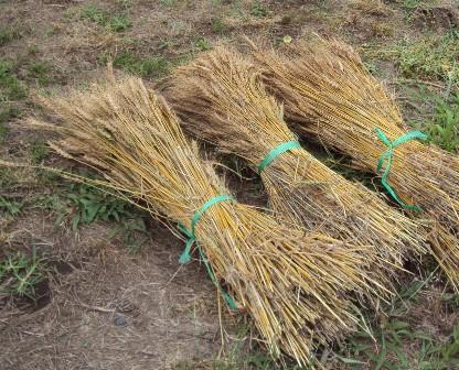 束ねた小麦