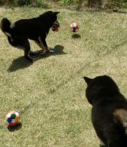 ボール クロマロ2