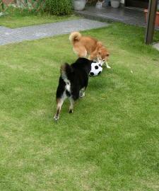 サッカー 3