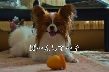 しおん3d_TSCE37