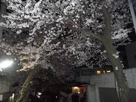 02140404桜