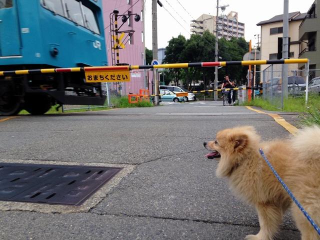 2014.7.19 和田岬線踏み切りと須磨ビーチのイルカに遭遇しました!(^^)!