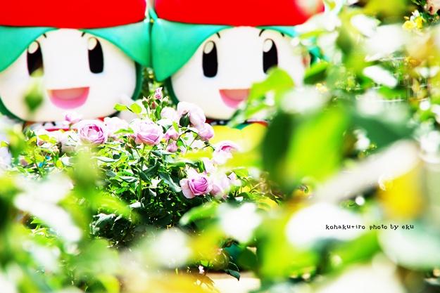 roseちゃん