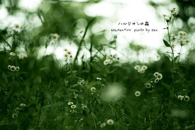 harujion_20140528033904c39.jpg
