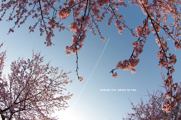 hikoki_2014040901051521e.jpg
