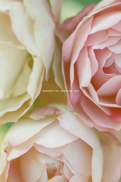 pink3_20140612120126b1b.jpg
