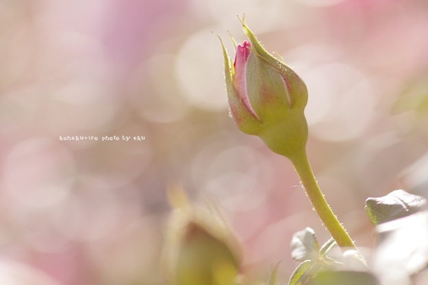 pink_20140612120124b2d.jpg