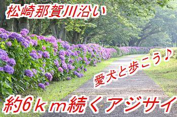 ajisai_20140510024350bb8.jpg