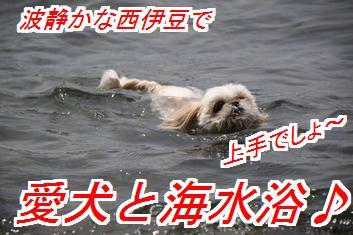 umisii_20140604030559f8a.jpg