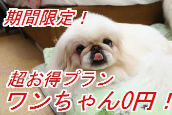 wan0en1_20140527022427185.jpg