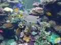 22SA熱帯魚