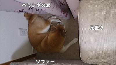 DSC_00161.jpg