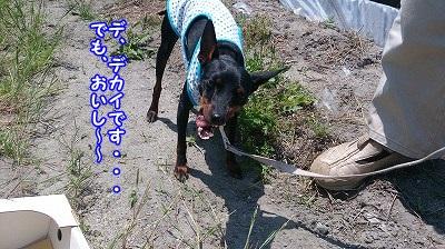 DSC_0344_201405211543457c1.jpg