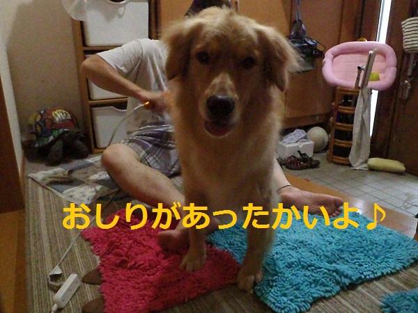 P8160057.jpg