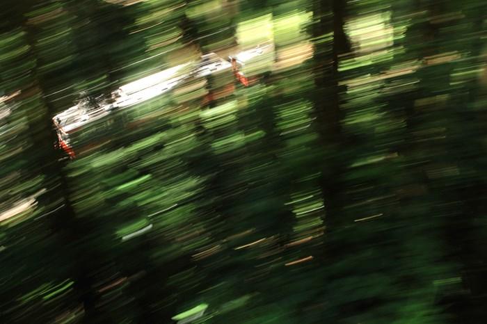 14-08-07 緑厚い森をゆく