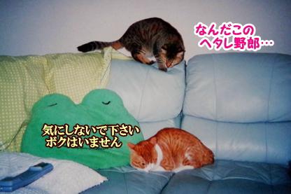 お見合い 4