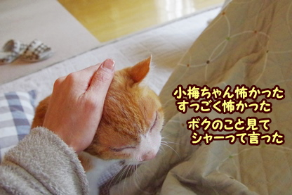 お見合い 5