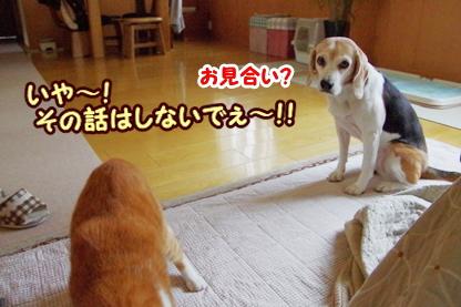 お見合い 1