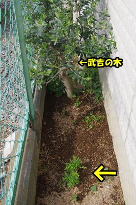 コテツの木 3