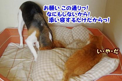 犬部屋 6