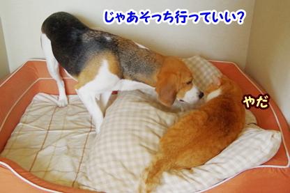 犬部屋 5