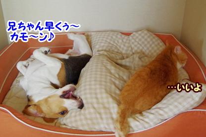 犬部屋 4