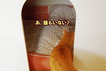 犬部屋 2