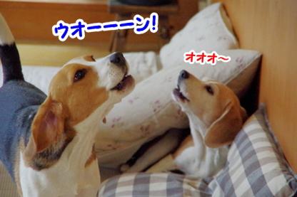 遠吠え 3