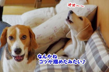 遠吠え 4