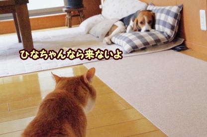 待ち伏せ 4