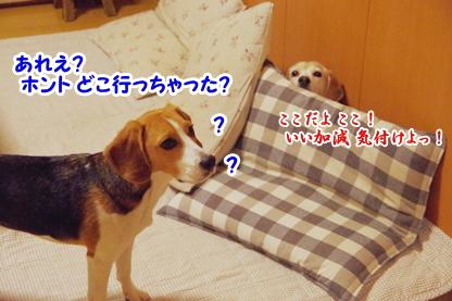 かくれんぼ 5