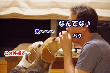 さくらんぼ 9