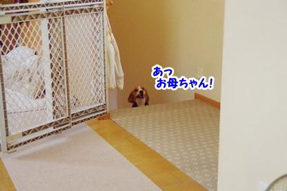 ゲート 3