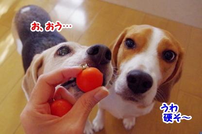 トマト 7