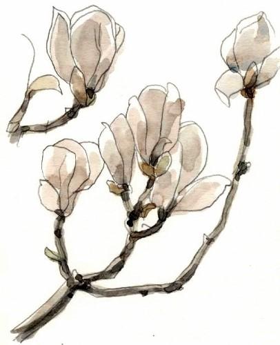 木蓮白 (406x500)