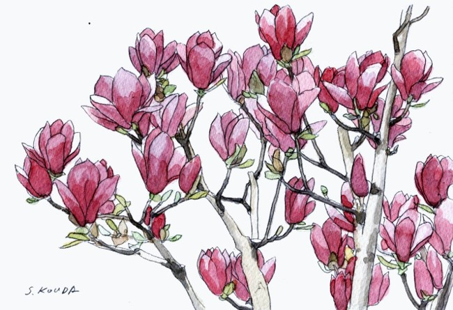 紫木蓮SM2 (650x445)